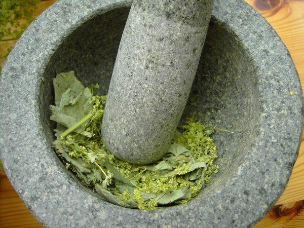 Hoe maak je een tinctuur van geneeskrachtige planten: de traditionele methode