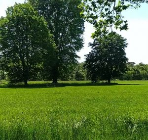 kikkers veld bomen